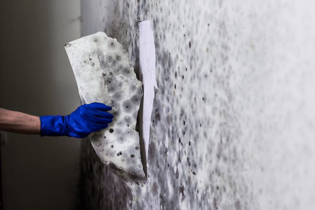How to Control Moisture, Mold, and Humidity on the Job Site