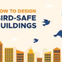 How to Design Bird-Safe Buildings