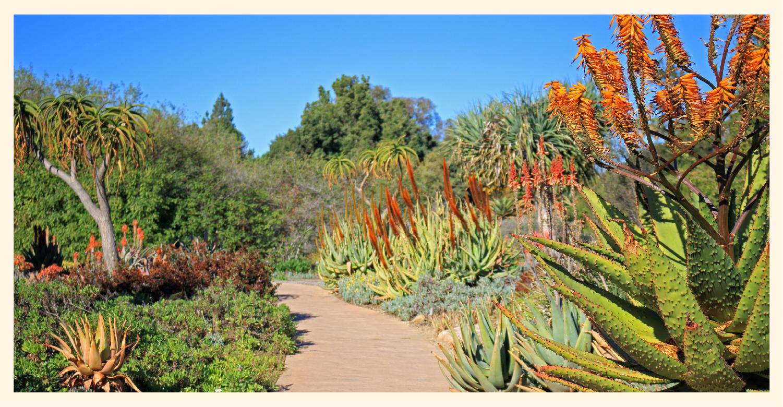 Native flora and fauna in California