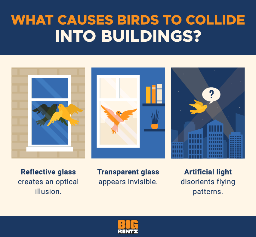 what causes birds to collide into buildings?